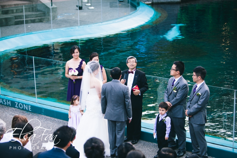 Vancouver Aquarium Wedding Photos